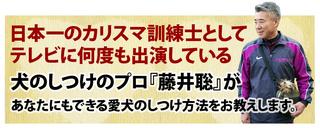 fujii_dog0106.png