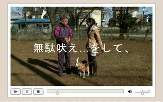 藤井聡犬のしつけ公式サイト